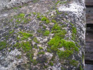 piedra para construcción con musgo que prolifera en ella con la llegada del otoño