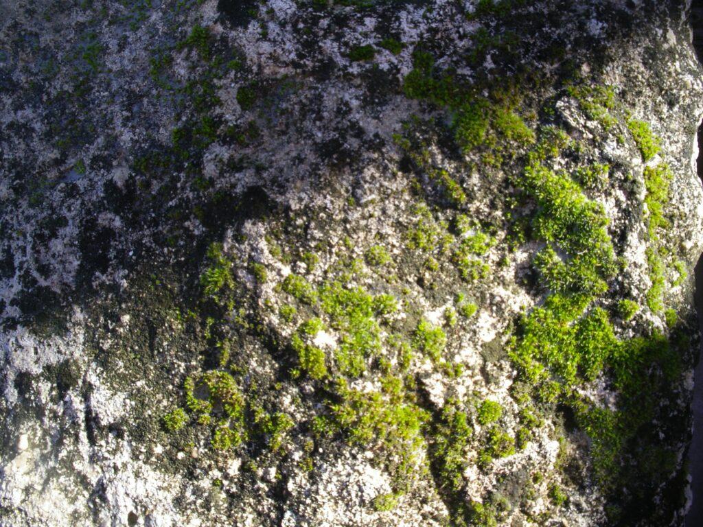 esas ventajas de la piedra natural y la humedad del ambiente