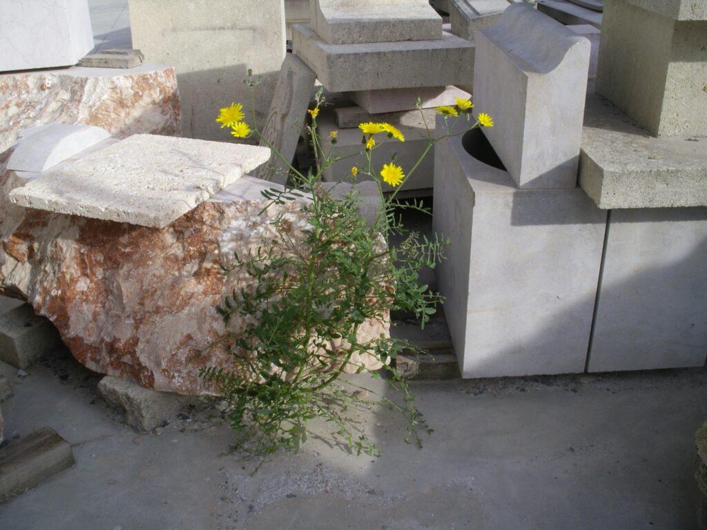 las ventajas de la piedra natural ofrecidas a la vida vegetal